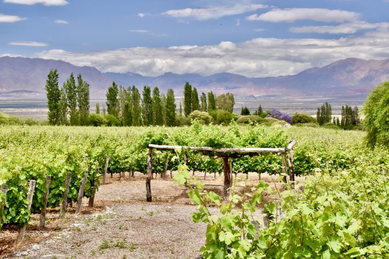 tips for south america travel - picture of vineyards in argentina