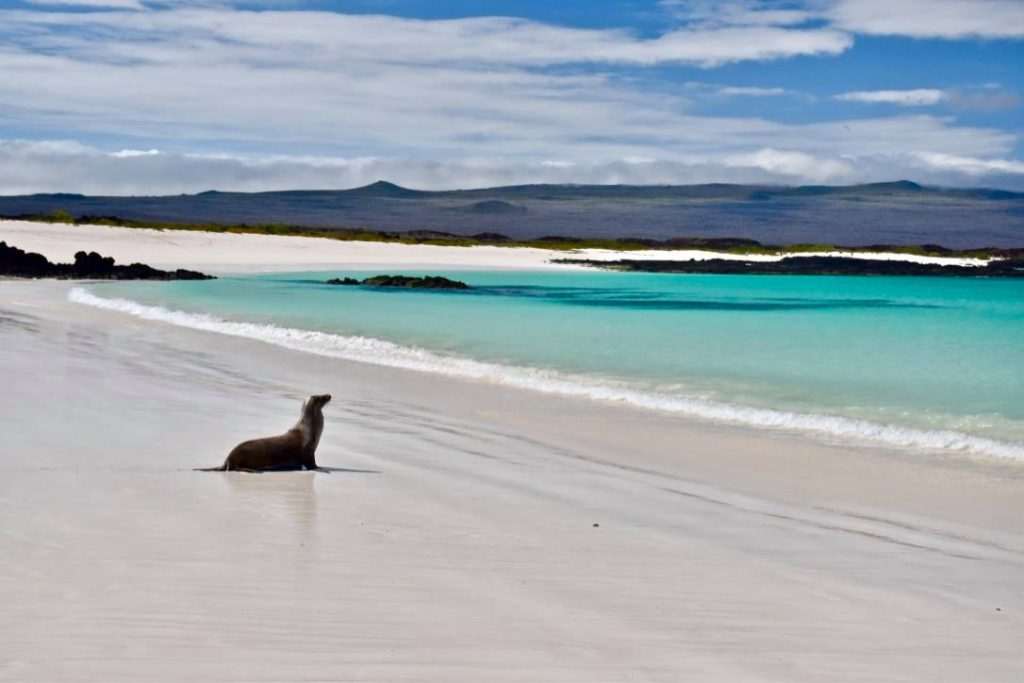 galapagos island hopping cerro brugo beach with a lone sea lion