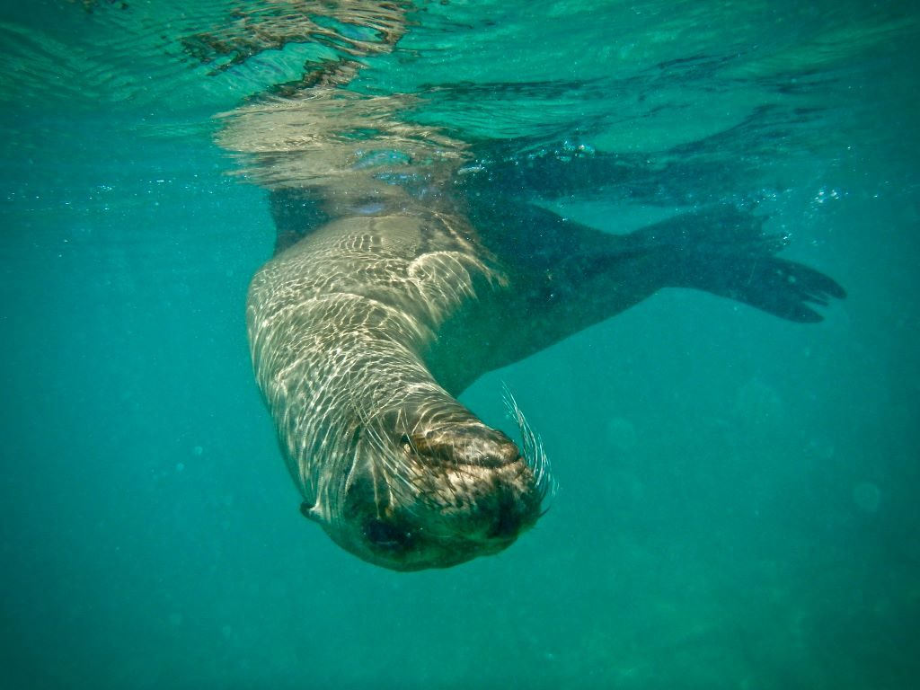 sea lion under water on a budget galapagos cruise