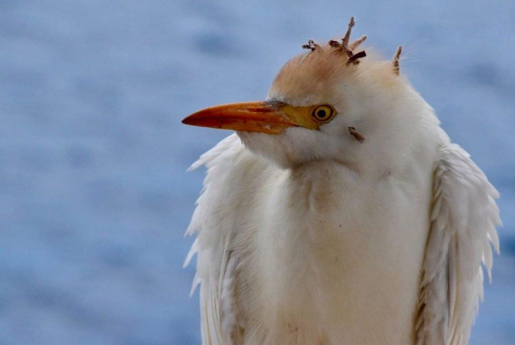 galapagos island hopping unusual looking bird