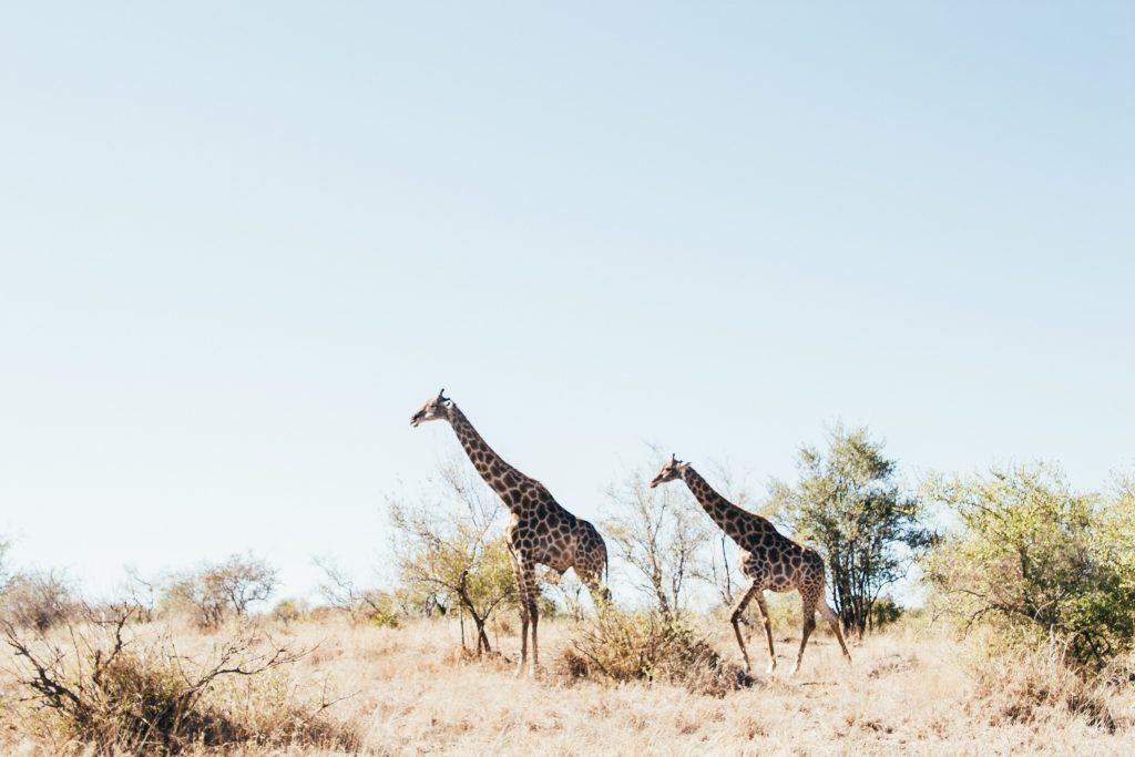 spend your holiday entitlement on safari in africa