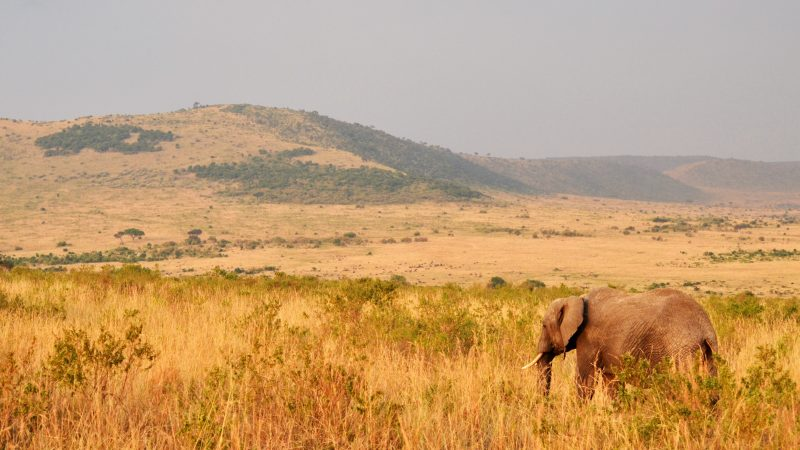 an elephant on safari in africa with intrepid travel