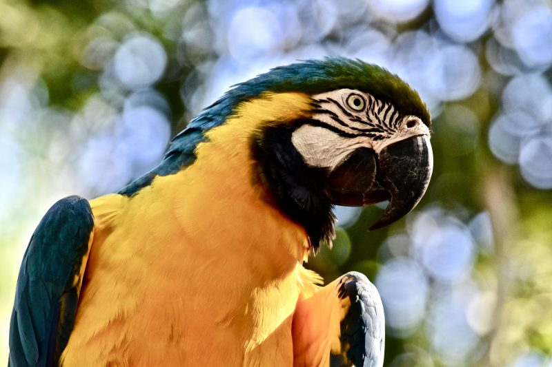 bird park brazil igauzu south america itinerary
