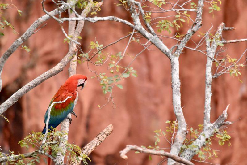 buraco das araras brazil south america itinerary