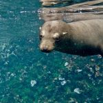 snorkelling with sea lions galapagos south america itinerary