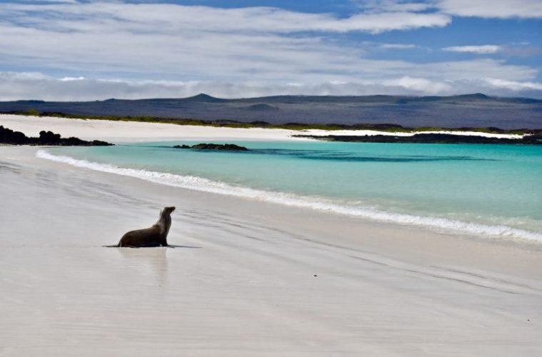 sealion on the beautiful beach cerro brujo on san cristobal in the galapagos islands, ecuador