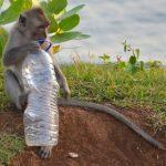 Monkeys at uluwatu bali