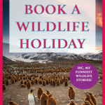 Slapped in the face by and eagle and other wild animal encounters - My funny animal stories and tips on how to plan a safari or wildlife trip. Whether your focus is conservation or wildlife photography, these tips will help you plan a wildlife vacation for any nature and animal lovers! From luxury safari lodges to safari camping to galapagos and antarctic sailing trips #wildlife #wildlifeholidays #wildlifevacations #wildlifetrips