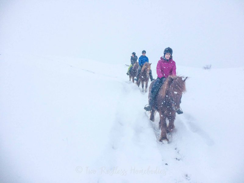 horse riding through the snow in iceland