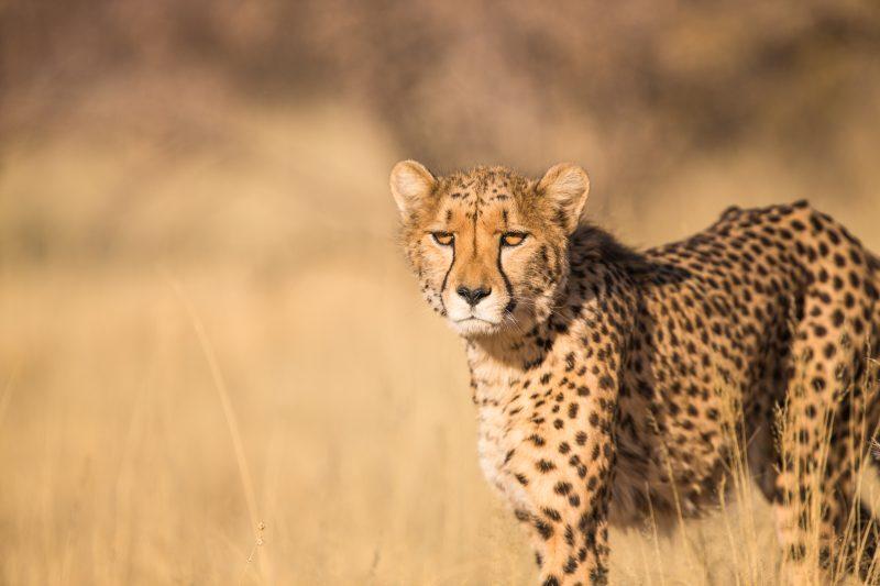 black fridays deals on adventure tours picture of a leopard on safari