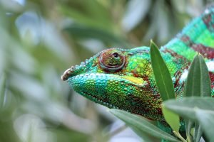 other epic bucket list experiences lizard in madagascar