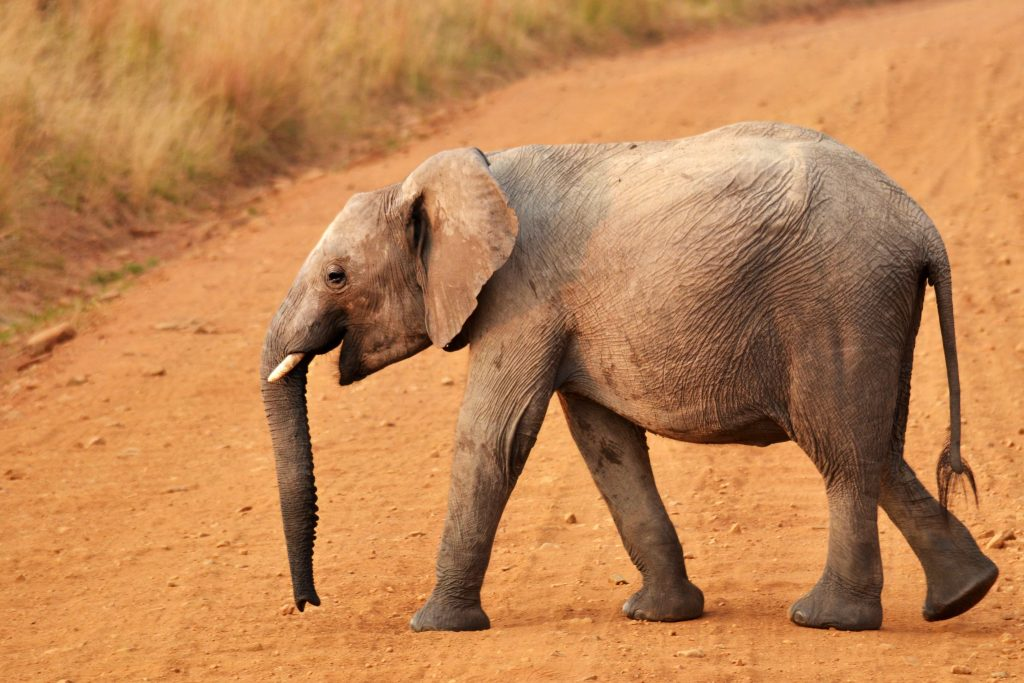 group travel for singles perfect for safari picture of elephant