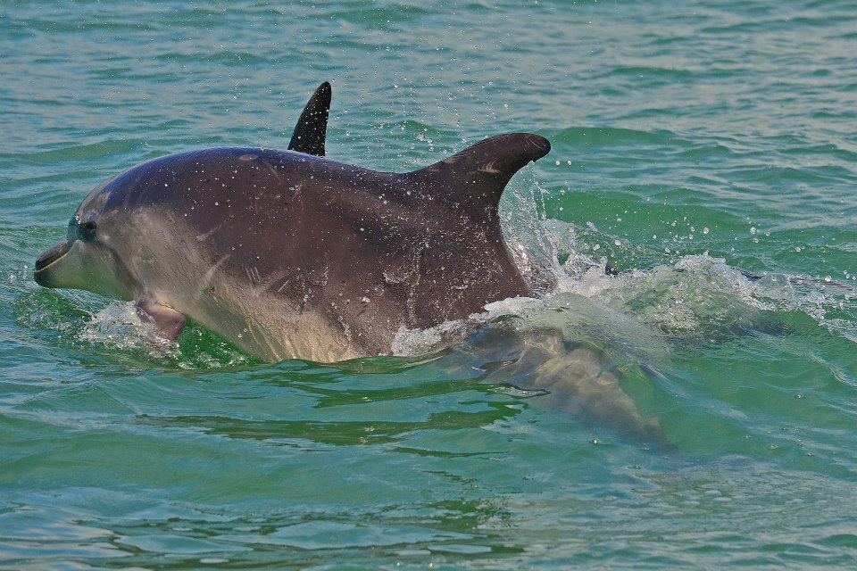 new zealand north island bay of islands swim with dolphins