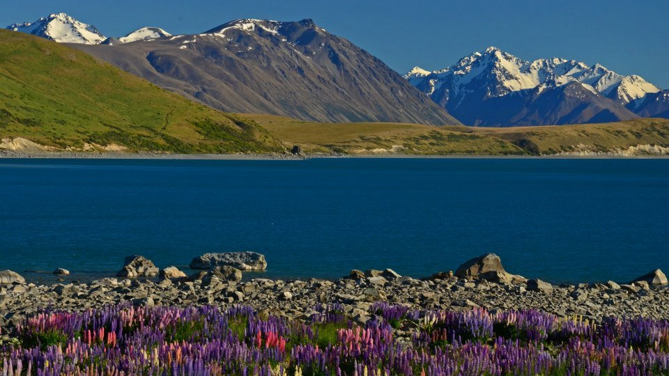 new zealand south island itinerary lake tekapo with lupins