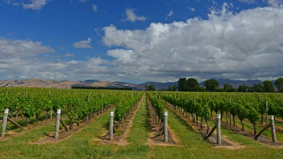 new zealand south island itinerary vineyards