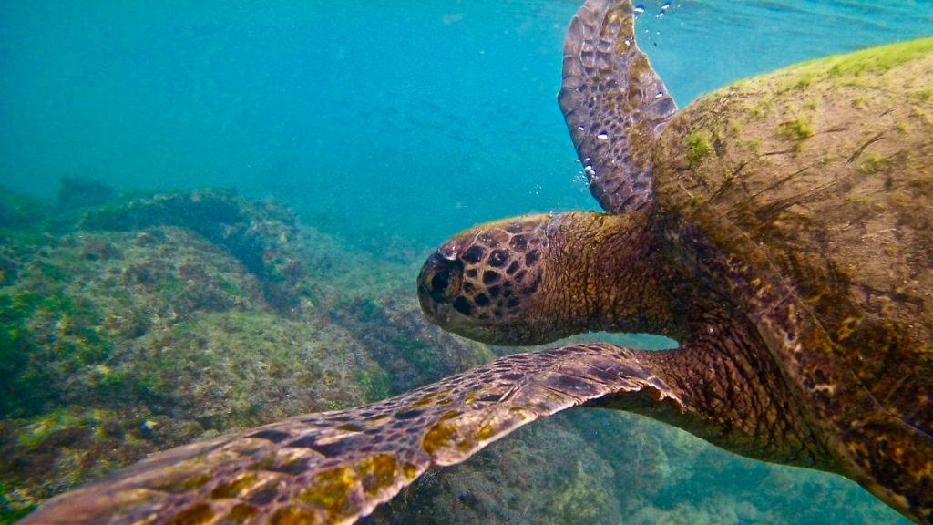 Galapagos packing list sea turtle
