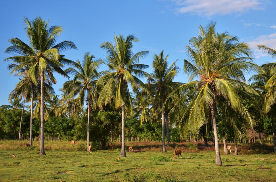 Indonesia Itinerary gili air