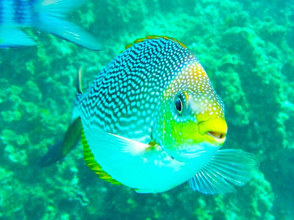 Thailand snorkelling yellow fish