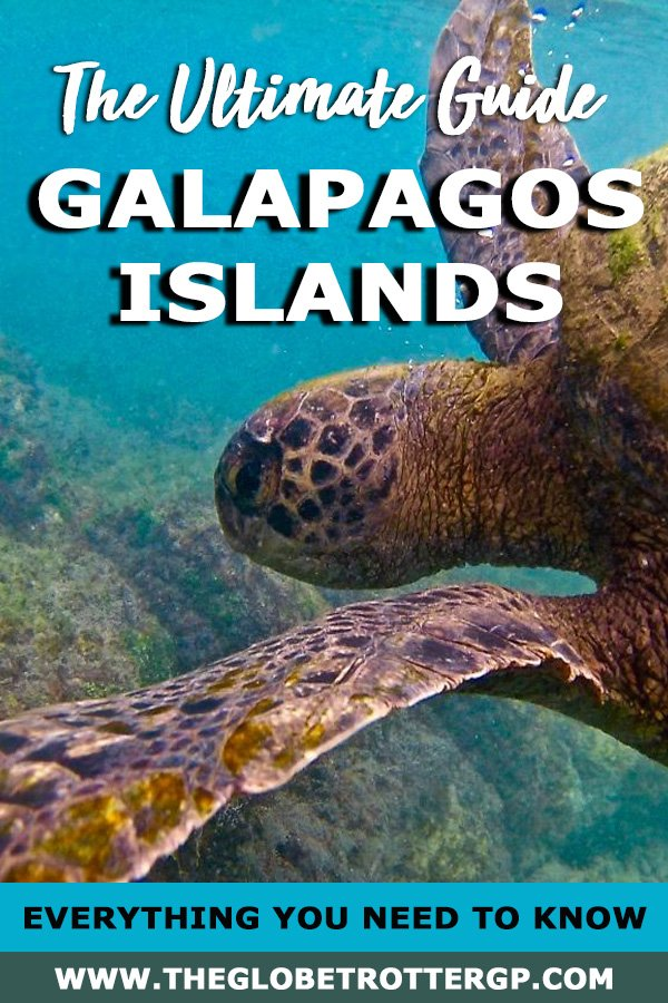 The ultimate Galapagos Islands travel guide! If you want to visit The Galapagos on a budget, this guide has everything you need to plan your trip to the galapagos with or without a cruise. The cheapest tours, the best accommodation and free things to do in the Galapagos Islands! This guide will tell you what you need to see and when you should visit and how to save money in the galapagos islands #galapagos
