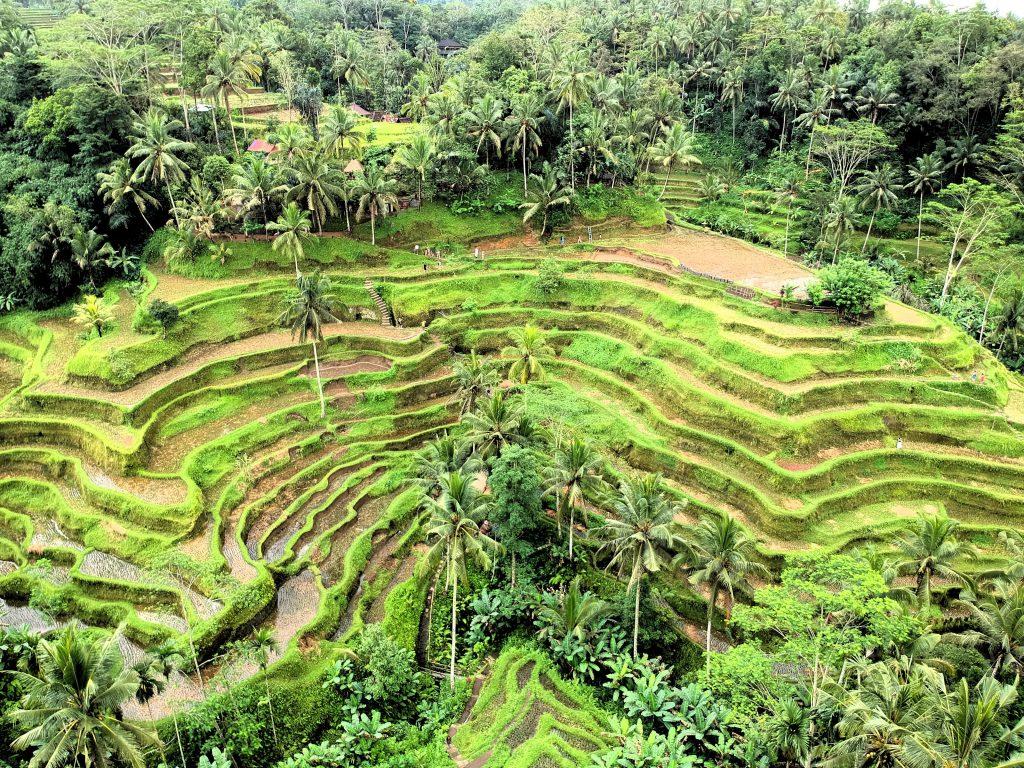 indonesia itinerary bali ubud rice paddies