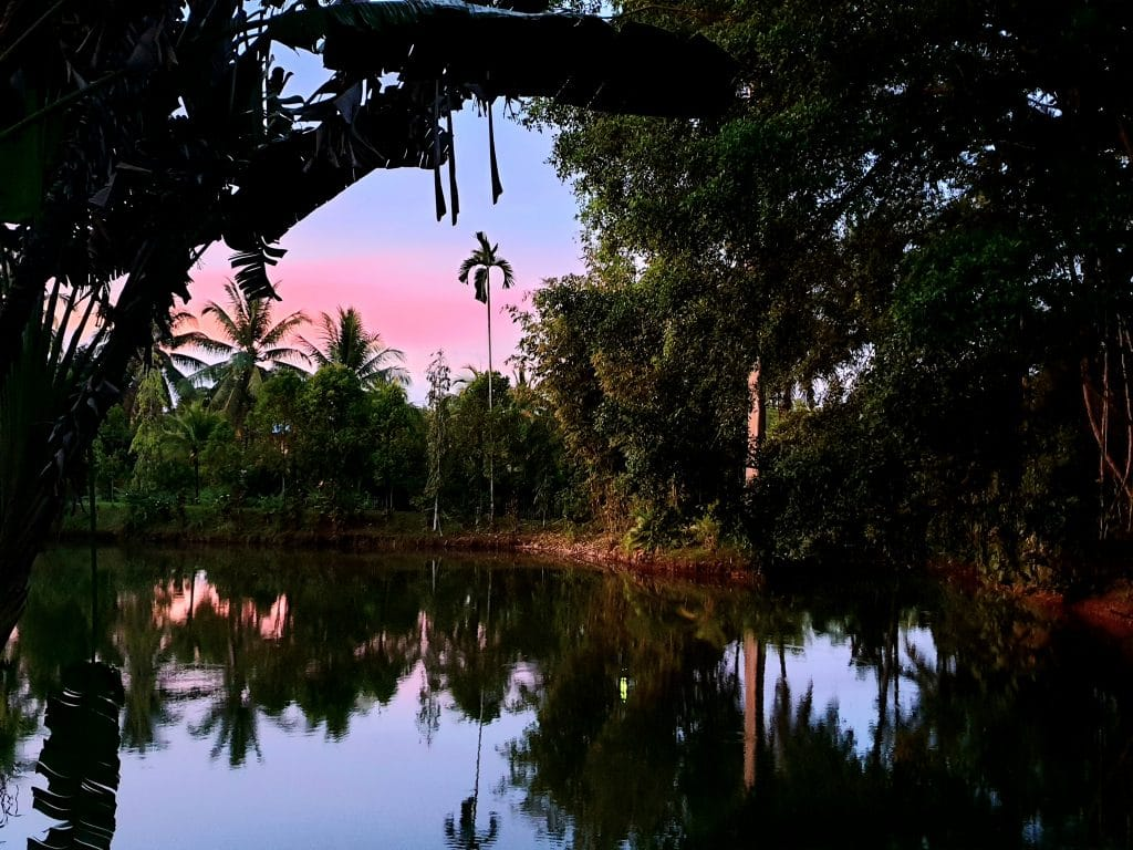 sepilok jungle resort gardens at sunset