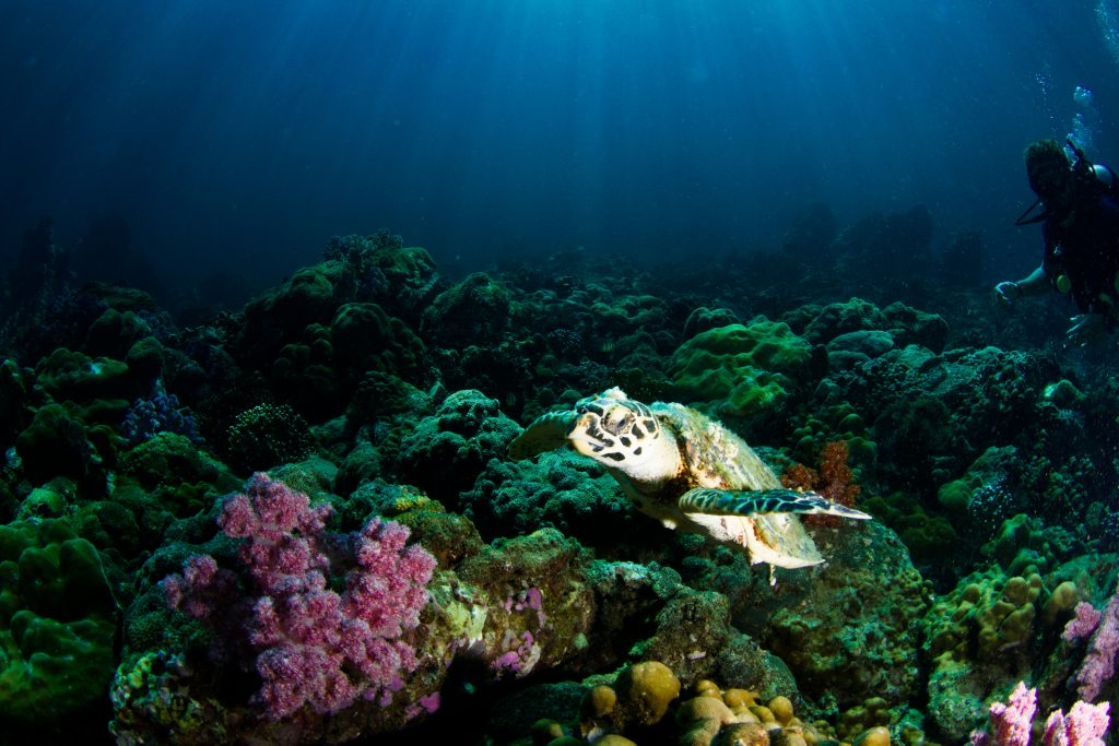 diving in thailand coral reef