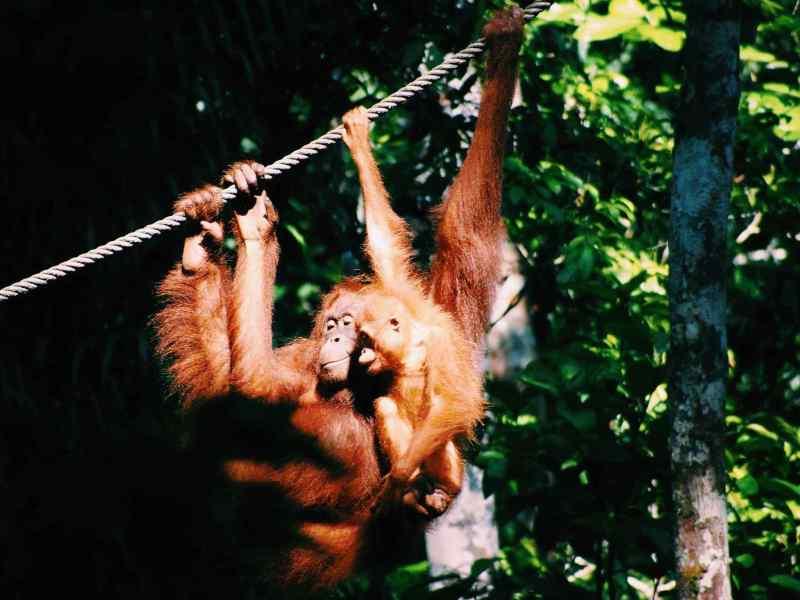 kuching wildlife park