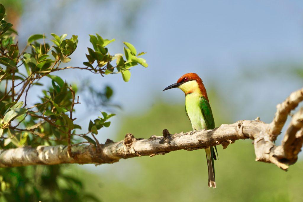 colourful bird seen on a wildlife safari in sri lanka