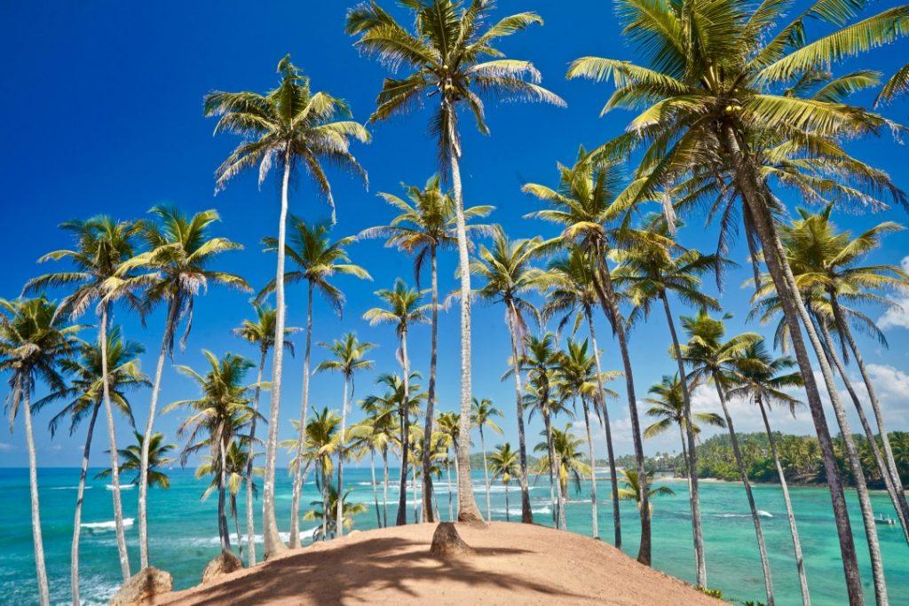 coconut tree hill in sri lanka, mirissa