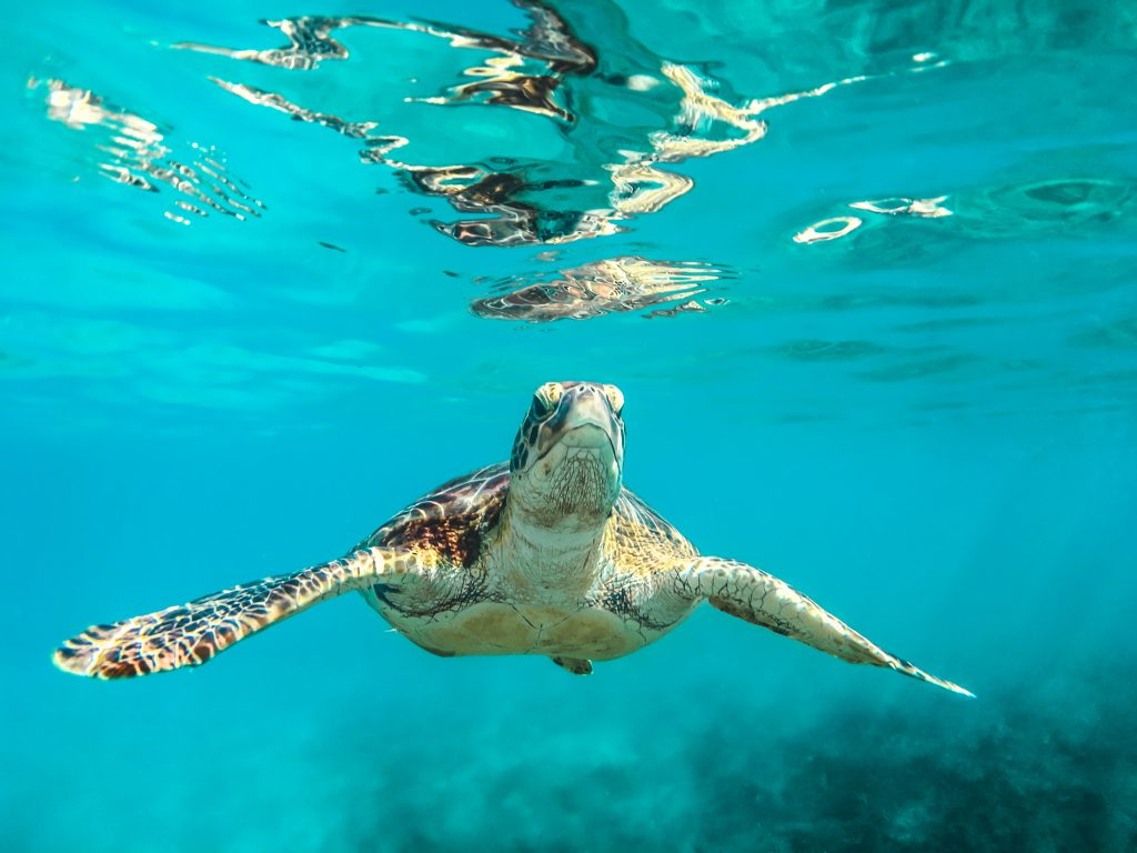 swimming with turtles in mirissa