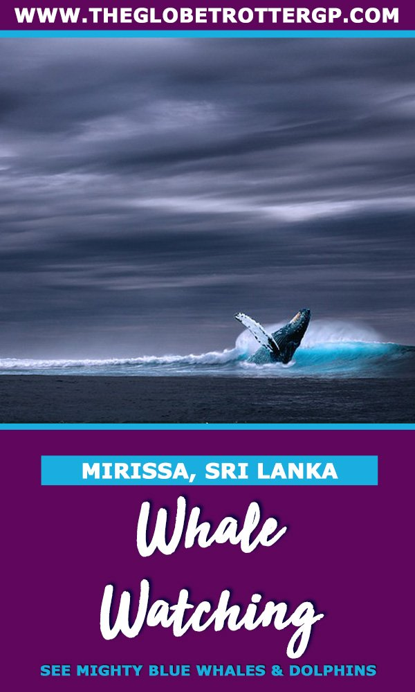 Blue Whale Watching in Mirissa, Sri Lanka: A Guide - The Globetrotter GP
