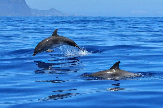 whale watching in mirissa - you may see dolphins