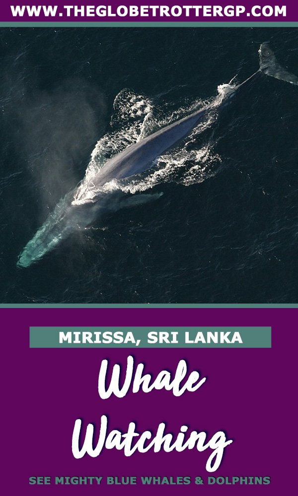 whale watching in mirissa sri lanka