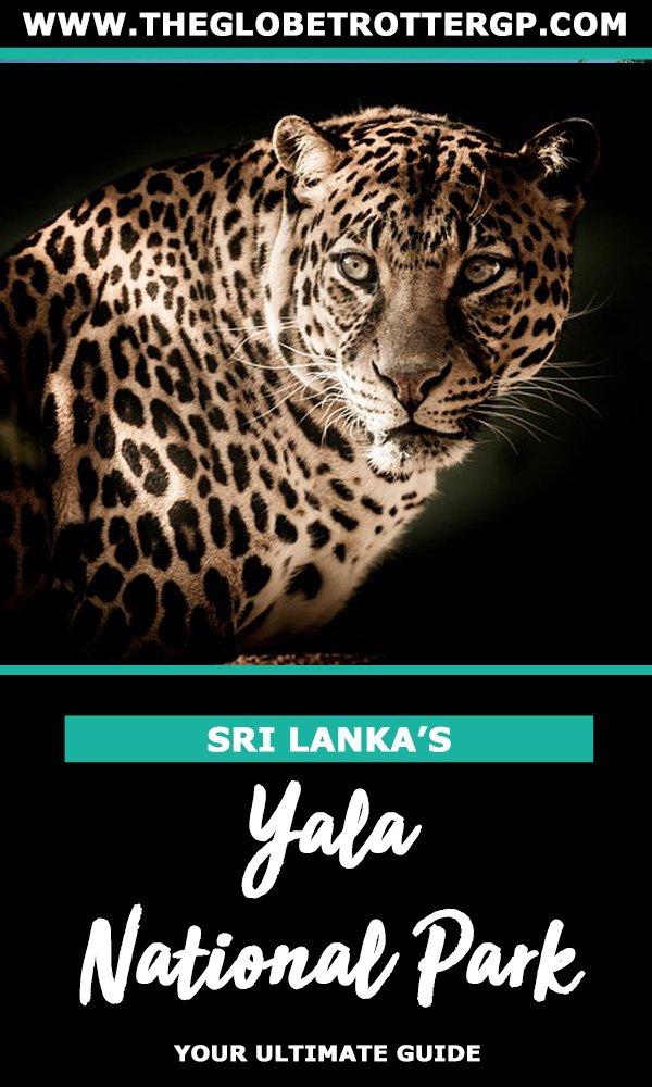 yala national park leopard safari