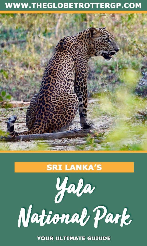 yala safari for leopards
