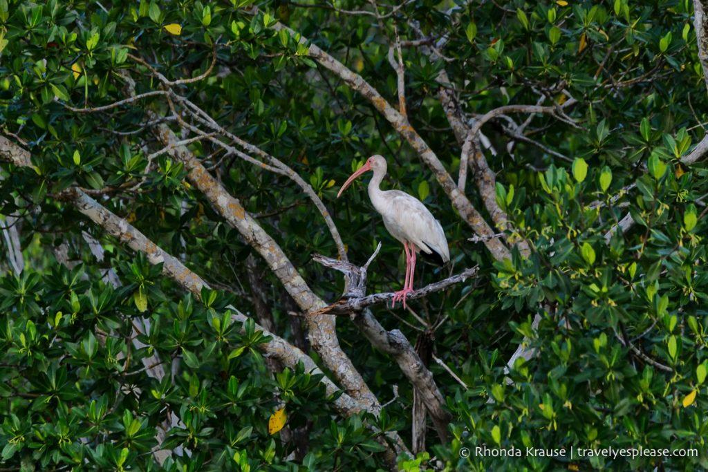bird in everglades florida