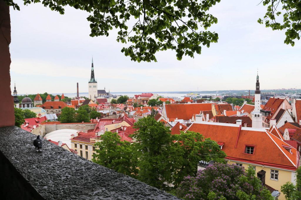 Tallinn with colourful red roofs