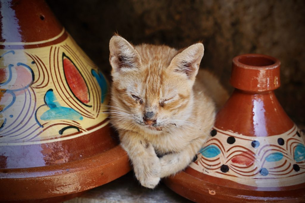 cat sitting between 2 tagines in morocco