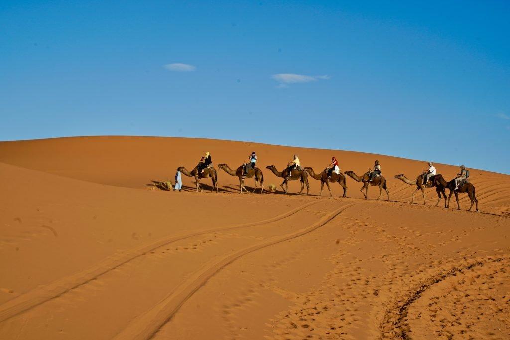 camels trekking across the sahara desert