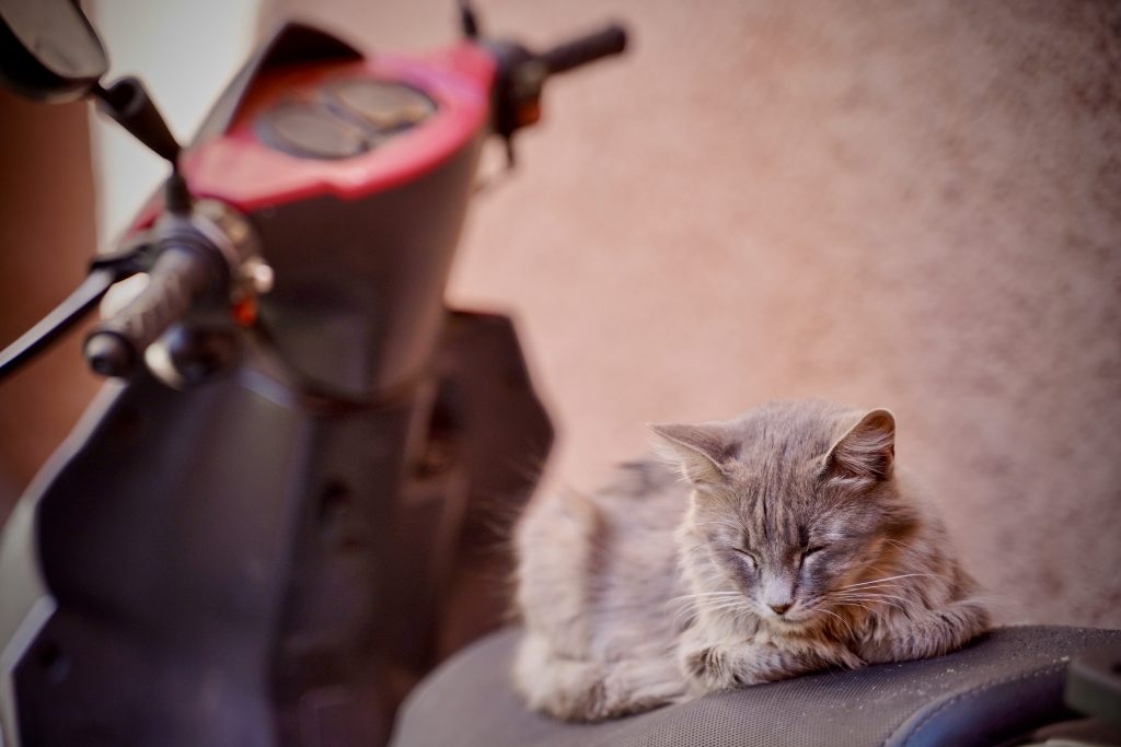 fluffy cat asleep on a motorbike in marrakech