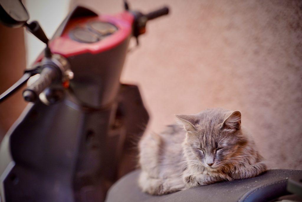 fluffy cat asleep on a motorbike in marrakech