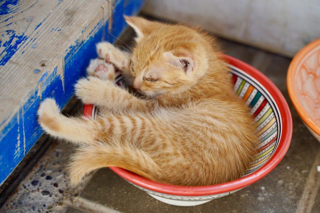 kitten asleep in a bowl