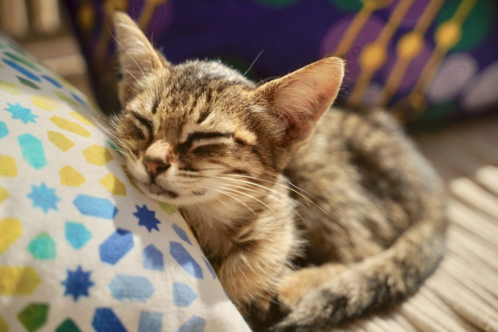 kitten asleep on a pillow