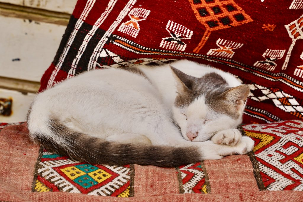 cat sitting on colourful berber carpets