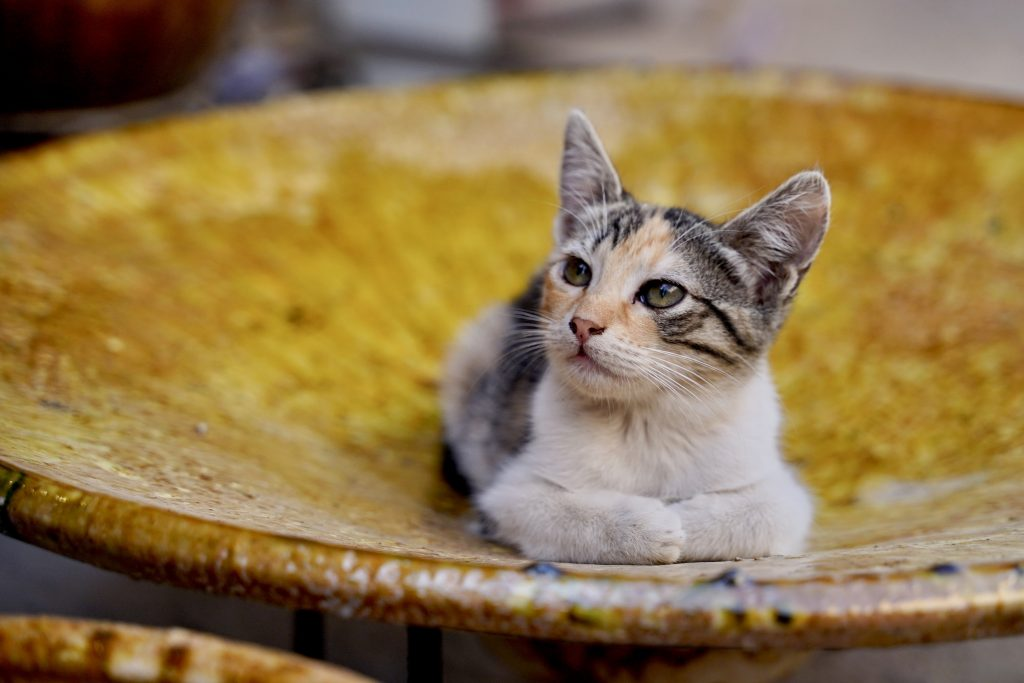 Kitten sitting on a plate